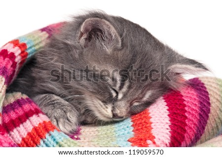 Cute little kitten in a knitted scarf isolated on white background - stock photo