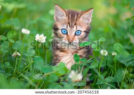 cute little kitten in the clover meadow - stock photo