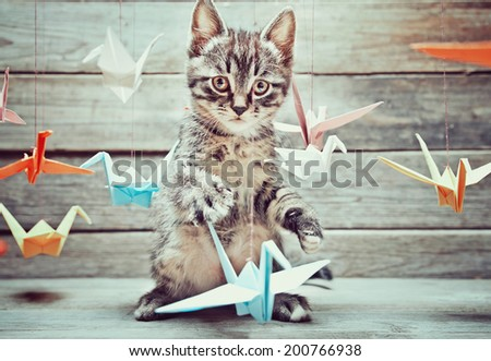 Cute little kitten is playing with colorful paper cranes and looking at camera on wooden background.  - stock photo