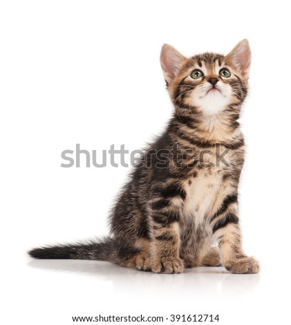 Cute little kitten isolated on white background - stock photo