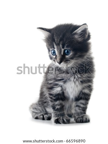 cute little kitten isolated over white shallow dof - stock photo