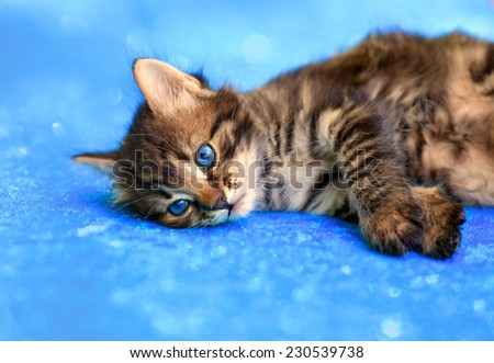 Cute little kitten lying on blue sparkling blanket