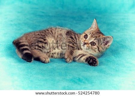 Cute little kitten lying the soft fir blue blanket