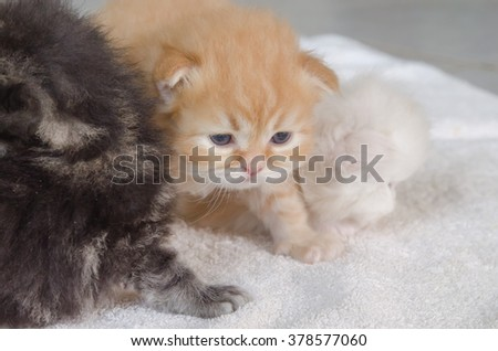 Cute little kitten lying towel
