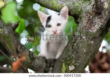 Cute little kitten on the tree in garden. Cat climbing the tree