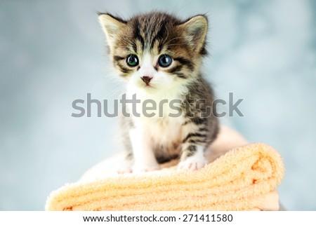 Cute little kitten on towel, on light background - stock photo