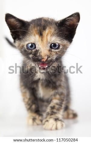 cute little kitten, shallow DOF - stock photo