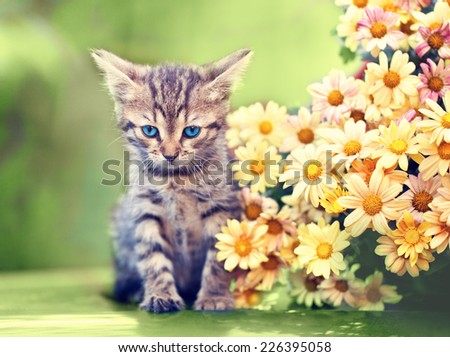 Cute little kitten sitting near flowers outdoor - stock photo