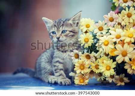 Cute little kitten sitting near yellow daisy flowers