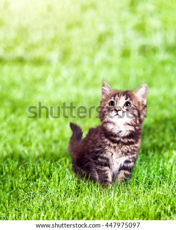 Cute little kitten sitting on green grass looking up with copy space.