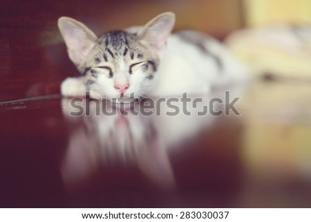 Cute little kitten sleeps on wooden background