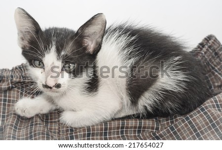 cute little kitten (thai cats) on textile pattern