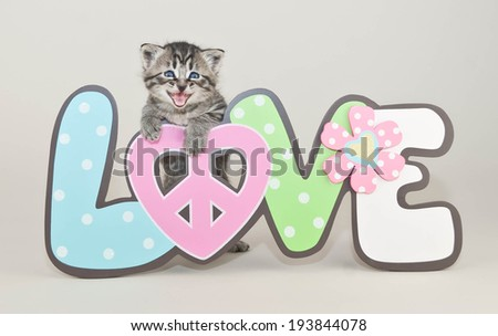 Cute little kitten that looks like she is smiling with a love sign. - stock photo