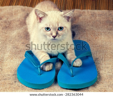 Cute little kitten wearing flip flops sandals - stock photo