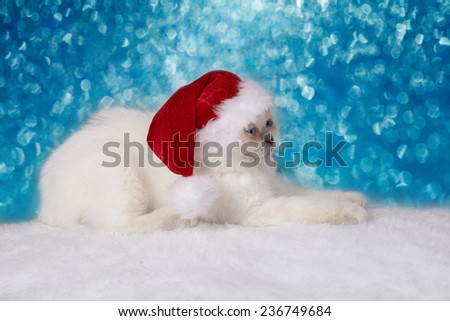 Cute little kitten wearing Santa Claus hat relaxing against blue Christmas background