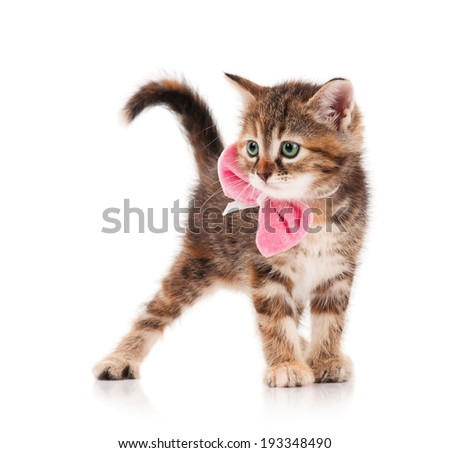 Cute little kitten  with a plush bow on a neck on a white background - stock photo
