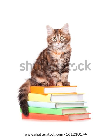 Cute little kitten with books over white background