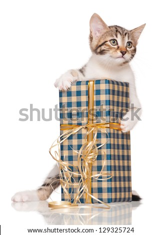 Cute little kitten with gift package isolated on white background - stock photo