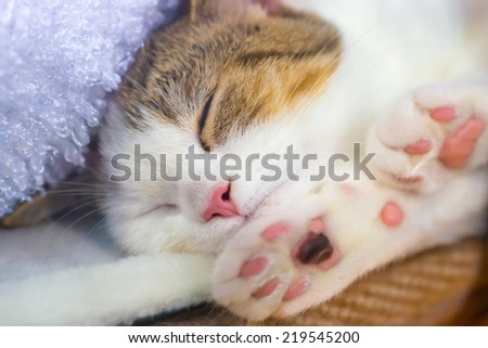 Cute little kitten with pink paws sleeps on a blanket  - stock photo