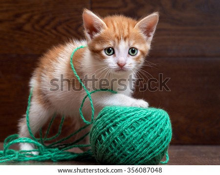 Cute little kitten with thread ball. Little kitten playing with a large ball of green wool yarn. Kitten green eyes. Kitten color, white with red fluffy. Sad eyes. Kitten small cute. Kitten 1 month - stock photo