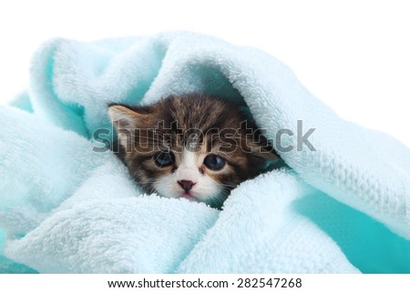 Cute little kitten with towel, on white background - stock photo