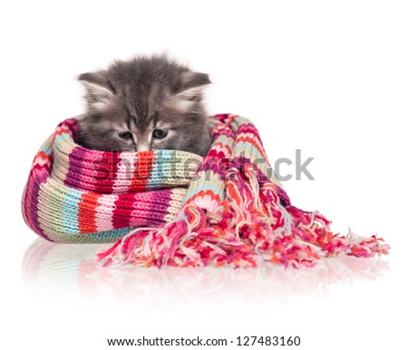 Cute little kitten wrapped up in a warm knitted scarf on white background - stock photo