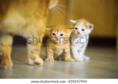 Cute little kittens - stock photo