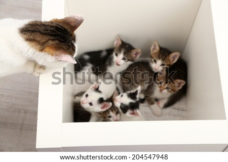 Cute little kittens, close up - stock photo