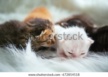 Cute little kittens on soft plaid at home