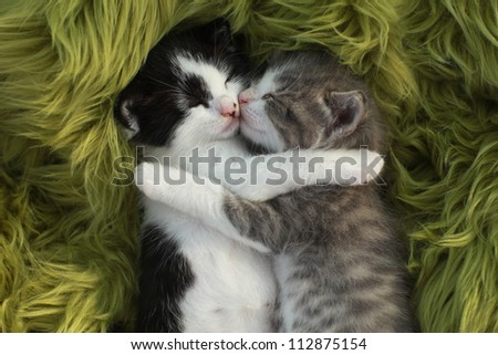 Cute Little Kittens Outdoors in Natural Light - stock photo