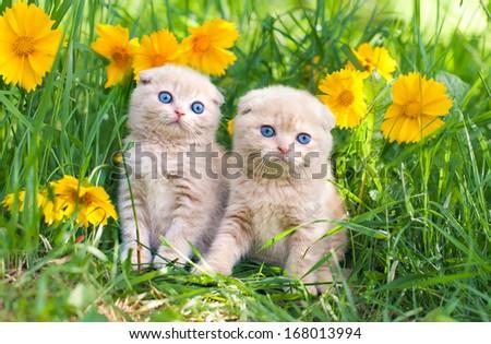 Cute little kittens sitting in flower meadow - stock photo