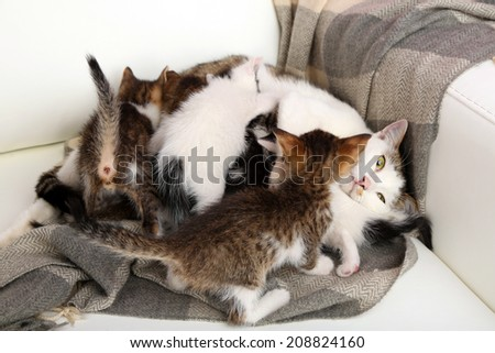 Cute little kittens with their mom, close up - stock photo