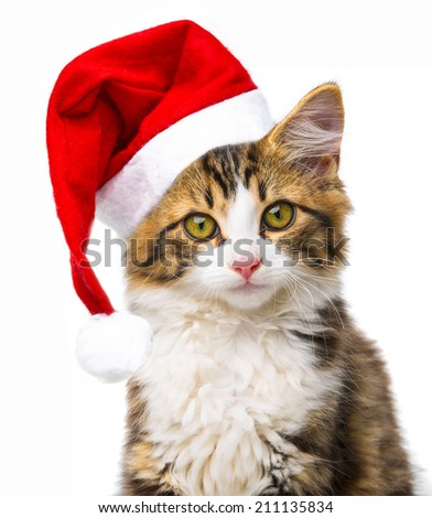 cute little long haired maine cat with santa cap - stock photo