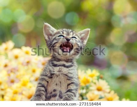 Cute little meowing kitten in the garden - stock photo