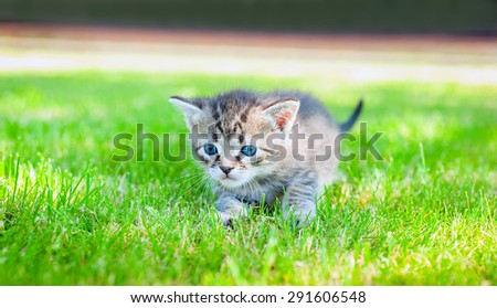 Cute little meowing kitten in the garden
