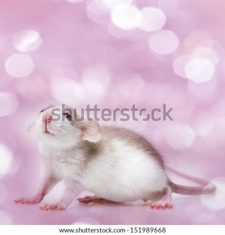 cute little mouse isolated on a pink background - stock photo