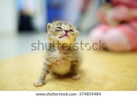 Cute little orphan kitten at home - stock photo