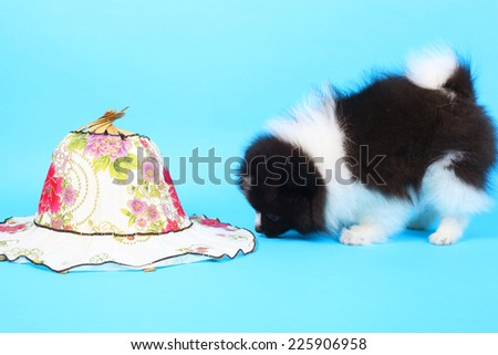 cute little puppy and summer hat - stock photo