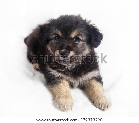 Cute little puppy dog on light background. Selective focus. - stock photo