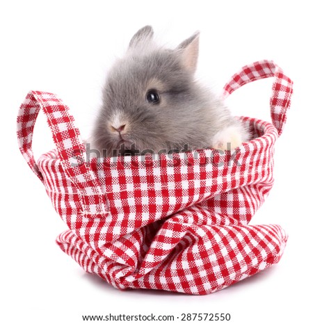 Cute little rabbit bunny in red plaid bag - stock photo