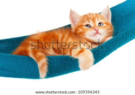 Cute little red kitten in a hammock  isolated on white background