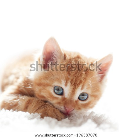 Cute little red kitten lies on fur white blanket - stock photo