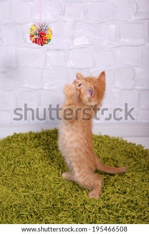 Cute little red kitten  on fluffy green carpet, on light wall background - stock photo