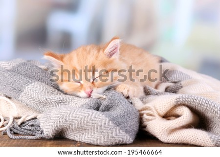 Cute little red kitten  sleeping on soft plaid, on bright background - stock photo