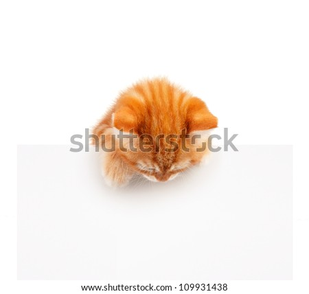 Cute little red kitten with empty board isolated on white background - stock photo