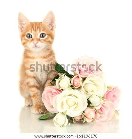 Cute little red kitten with roses isolated on white - stock photo