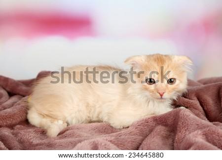 Cute little Scottish fold kitten on plaid - stock photo