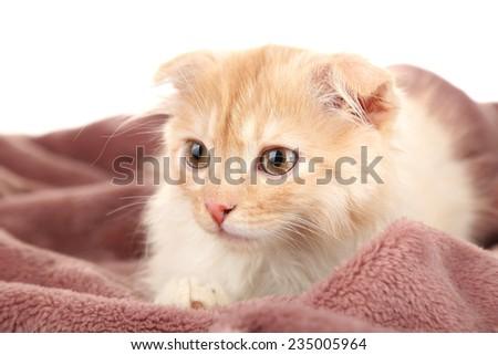 Cute little Scottish fold kitten on plaid, on white background - stock photo