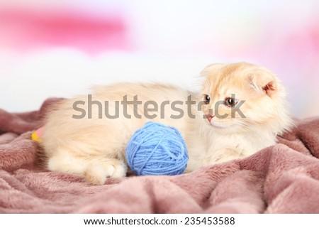 Cute little Scottish fold kitten on plaid with skein of thread - stock photo