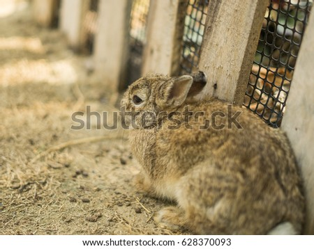 Cute little small rabbits in a farm